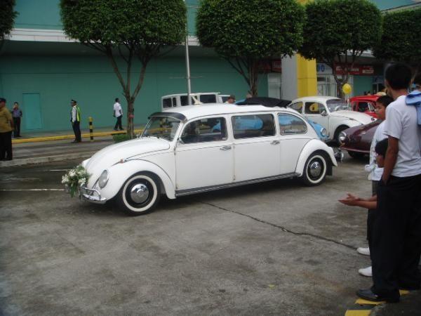 464.jpg - limo bug