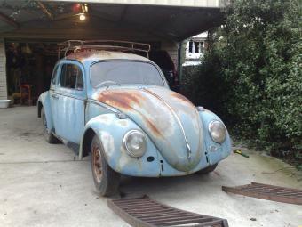 97.jpg - ratbug