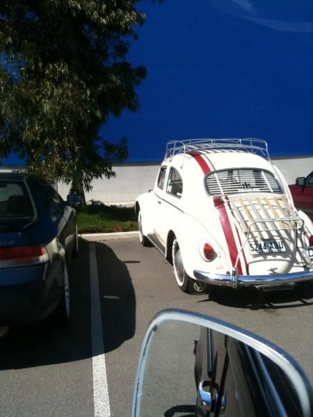 1397.jpg - ikea-beetle